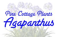 Pine Cottage Plants