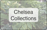 Chelsea Collections